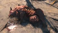 FO4 dead brahmin
