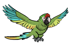 File:FoS trained parrot.png