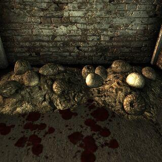 Кладка яєць в одному з ангарів на <a href=