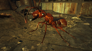 FO4NW Ant 3