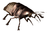 VB DD12 creat Cockroach
