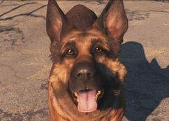 Dogmeat Fallout4