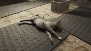 FO4 School Cat Diamond City