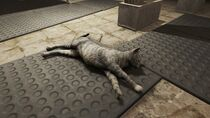 FO4 School Cat Diamond City