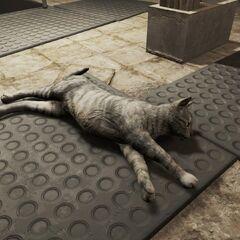 Кіт Торо в школі Даймонд-сіті (<i>Fallout 4</i>)