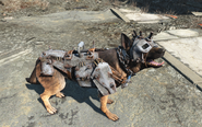 Fo4 dogs apparel