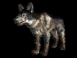FO3 Little Lamplight dog
