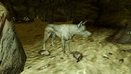 FNV Bug Coyote in Black Rock Cave