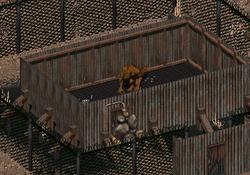 Kill the Chicken