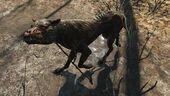 FO4 Feral mongrel