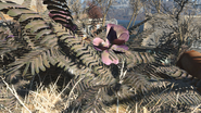 FO4 Mutated fern