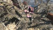 FO4 Mutated fern