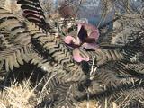 Растения (Fallout 4)