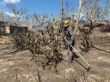 Торговец (Fallout 4)