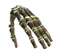 Left hand bones