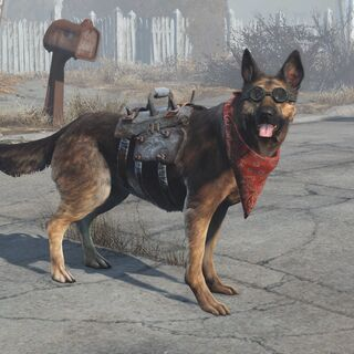 Dogmeat with equipped items