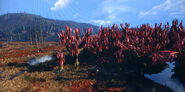 CranberryBog-Fallout76