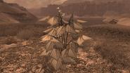 Vaina de judías pintas planta