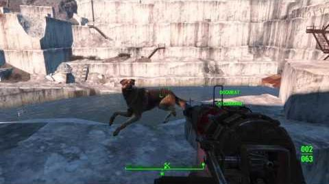 Fallout 4 glitch Dogmeat swimming in midair