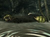 Swamplurks Bog