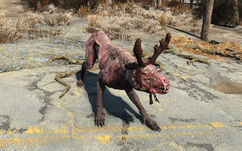 FO4 Rudolph
