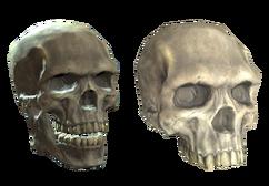 Plastic (upper) skull