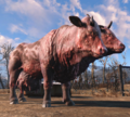 Clarabell Fo4.png