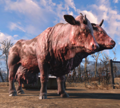 Clarabell Fo4