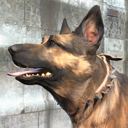 FO4 Собачий ошейник с шипами1