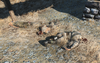 FO4 Pickman was here