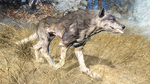 Fo4FH feral wolf