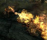 Frenzied fire ants