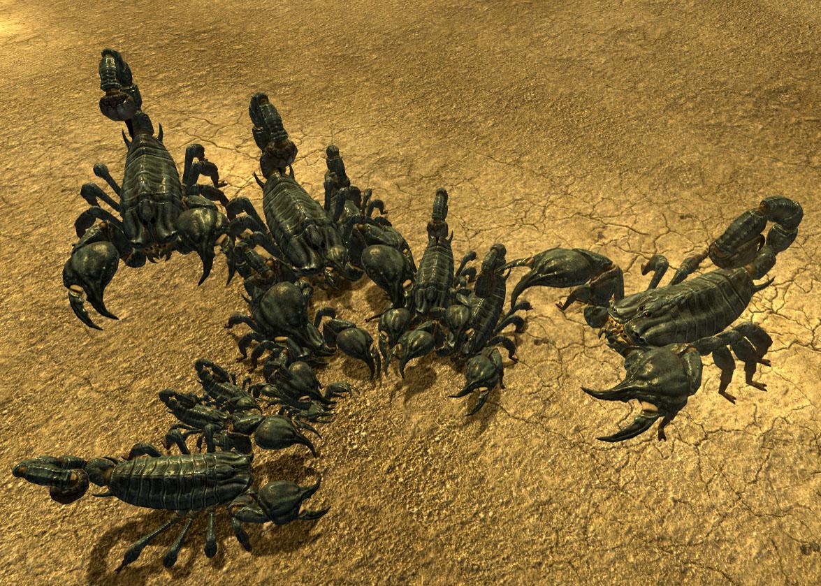 Scorpions at burrow
