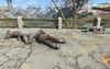 FO4 Scavengers corpses