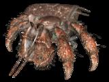 Hermit crab (Far Harbor)