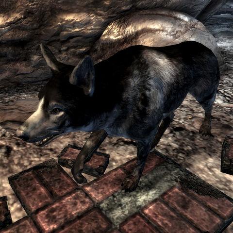 Дворняга в тунелях Лемплайта