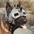 Dog helmet worn.png