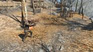 FO4 Old firing range scavenger