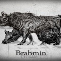 Брамін (концепт-арт <i>Fallout 3</i>)