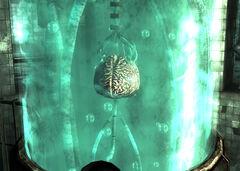 Calvert brain