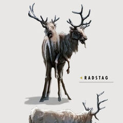 Radstag