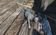 FO4 Maisie cat 3