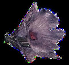 Melon blossom (Fallout 76)