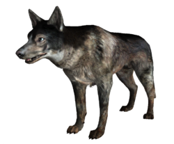 Dog FO3