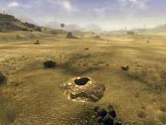 Scorpion burrow
