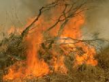 Extinguish the Fires of Burham Springs