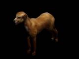 Dog (Van Buren)