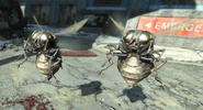 FO4 Black bloatflys attack