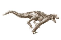 Radigator