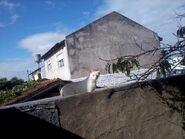 Simba en el techo